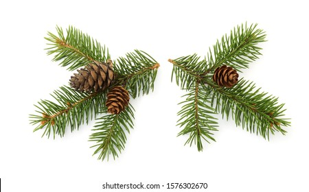 Two fresh fir branches with cones isolated on white