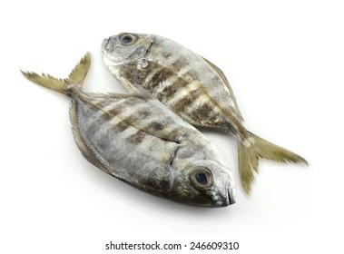 Two fresh fish on white background