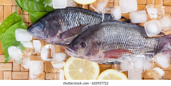 Two fresh fish on white plate ready to cook