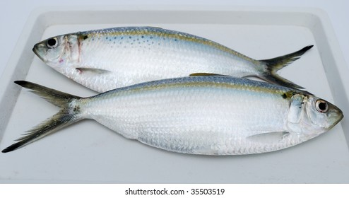 Two fresh fishes on a white support