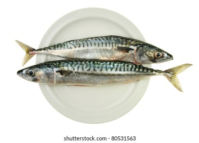 Two fresh mackerel fish head to tail on plate isolated against white