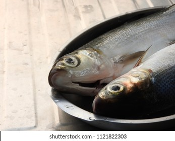 The two fresh raw milkfish (scientific name Chanos chanos) were cleaned, the fish scales had been removed, placed on iron plates. Popular delicious and nutritious fish dish in southern Taiwan.