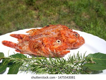 Two fresh and raw sea fish, Redfish Scorpaena scrofa on the plate, decorated with rosemary and laurel leaves, prepared for cooking