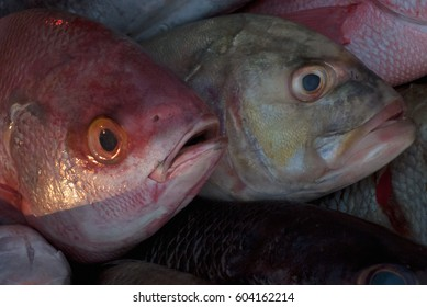 Two fresh sea fish for sale: gray fish with blue eye behind, and in front of a red fish with bulging eyes and open mouth.