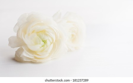 Two fresh spring big ranunculus flowers on a white board, close up