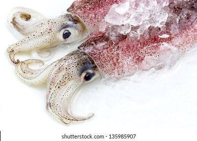 Two fresh squid isolated on white background