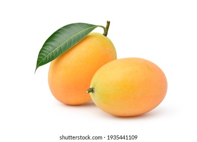 Two Fresh sweet marian plum fruits with leaf isolated on white background. Clipping path.
