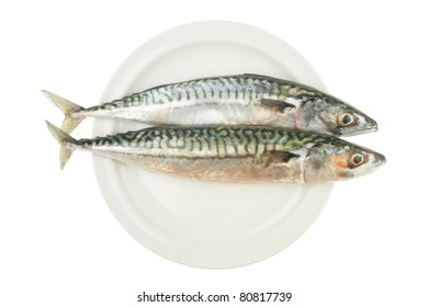Two fresh whole mackerel fish side by side on a plate isolated against white