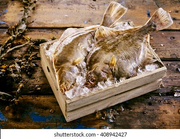 Two freshly caught flatfish, either halibut, flounder or sole, displayed in a small wooden crate of ice with fresh kelp seaweed alongside on an old rustic wooden table or floor