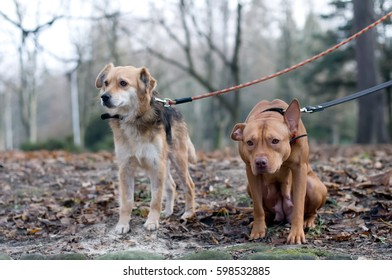 Two friend dogs in park siting and standing and looking somewhere sadly