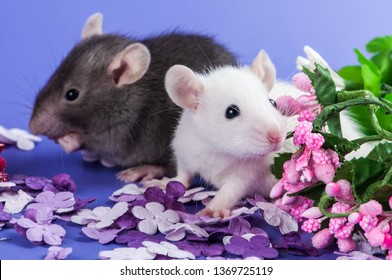 Two friends cute little rat white and black flowers sitting on a purple meadow of paper flowers. Chinese New Year symbol