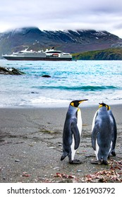 Two friends of king penguins in front of an Antarctic expedition cruise ship, South Georgia, vertical photo