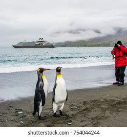 Two friends of king penguins in front of an Antarctic expedition cruise ship,  South Georgia