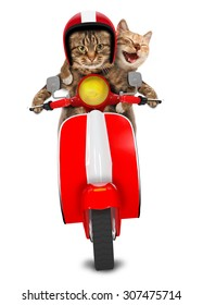 Two funny cats are driving a moped. Humorous theme.