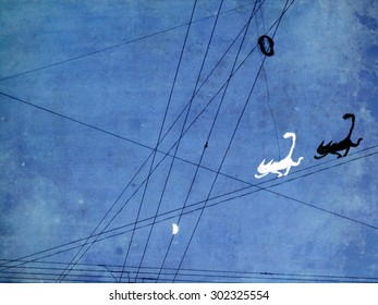 Two funny cats running in the wire on the backdrop of night sky.