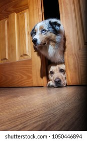 Two funny dogs spying behind the door