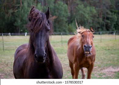 Two funny horses in the paddock