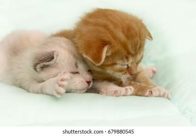 Two funny kitten sleeping.