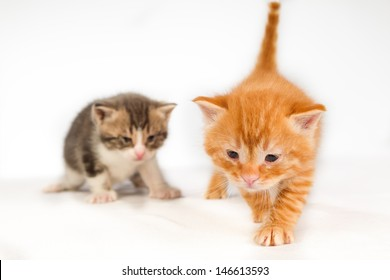 Two funny playful little red hair kittens playing with each other