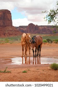two funny wild horses at watering hole, one appears to be yelling