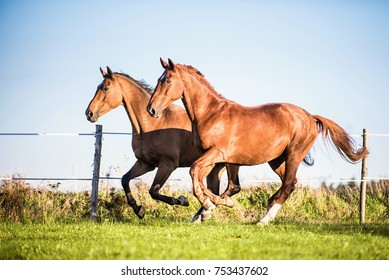 two galloping horses next to each other
