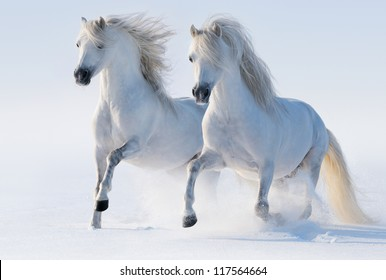 Two galloping snow-white horses.
