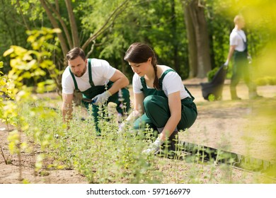Two gardeners kneeling on the ground and placing new plants