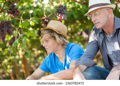 Two generations of vintners outdoor together. Senior and young winemakers in their vineyard. Small family winery business. Winegrowers in straw hats relaxing in garden at sunny day.