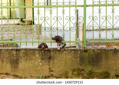 Two German Shorthaired Pointer behind metal fence. One dog looks sad with tears in eyes. Another stuck head through bars, motion blur. Space for text