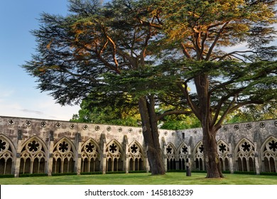 Two giant cedar tree in the Cloister Garden with arcaded covered walkway at Salisbury Cathedral Salisbury, England - June 9, 2019