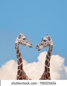Two giraffe animals are talking together up in the sky for a relationship communication idea concept.