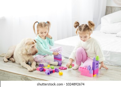 Two girls' children are played by plastic toys blocks. The dog lies. The concept of lifestyle, childhood, upbringing, family.