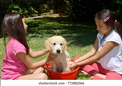 Two girls giving their pet Golden Retriever a bath