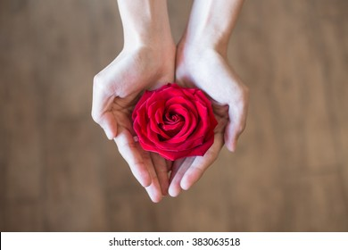 Two girl's hands holding red rose