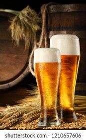 Two glass of beer .With wheat and barley and barrels spikes on bakcground.Still life