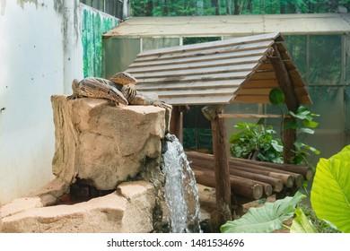 two goannas in a zoo