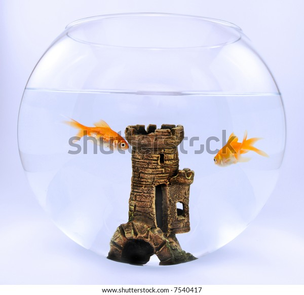 Two gold fish in aquarium with castle