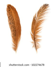 two golden feather on a white background