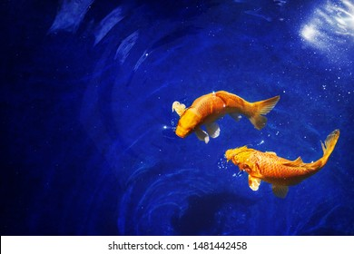 Two golden koi carp fishes close up, dark blue sea background, yellow goldfish swims in water, night moonlight glow, shiny stars, fantastic sky galaxy illustration, Pisces constellation horoscope sign