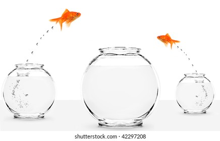 two goldfish jumping to bigger fishbowl isolated on white