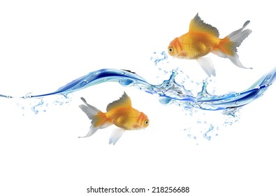 Two Goldfishes and blue water drops. water splash and water bubbles over white background