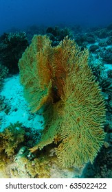 Two gorgonia over the sand inside the coral garden