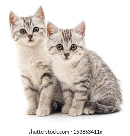 Two gray cat isolated on a white background.