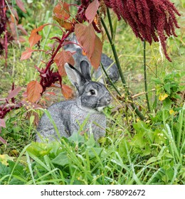 two gray, cute rabbit sits in the garden and eats celery
