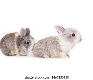 Two gray rabbits in front of white background