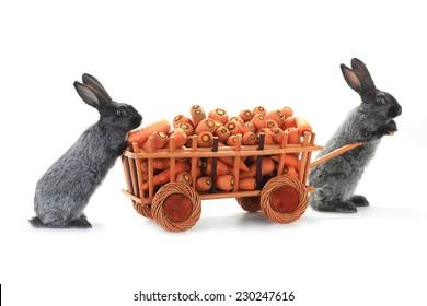 two gray rabbits vnut carrots