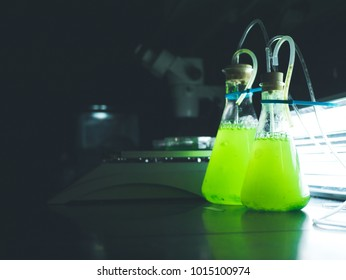 Two green algae cultures growing in glass flasks in a research laboratory with designated grow lights behind them. The glass flasks are one liter and 500 milliliters in size.