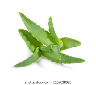 Two green aloe vera plants isolated on white background