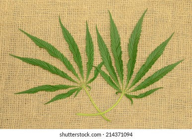 Two green hemp leaves on a burlap surface