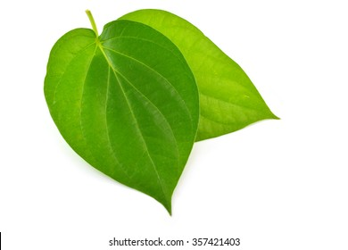 Two green leaf isolated on white background